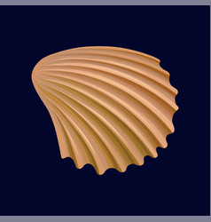 Rapana shell an empty shell of a sea mollusk vector