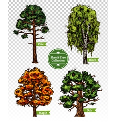 Color Sketch Tree Set vector image