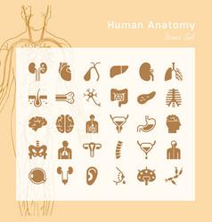 Set icons internal human organs vector
