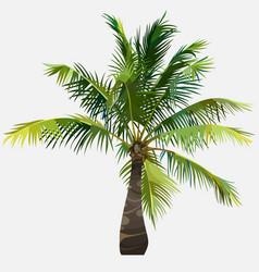 Tree little green fluffy spreading coconut tree vector