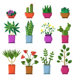 house plants in pots in flat vector image