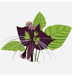 black flower of devil with leaves vector image