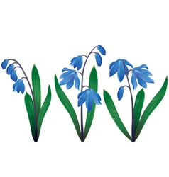 Blue snowdrops vector