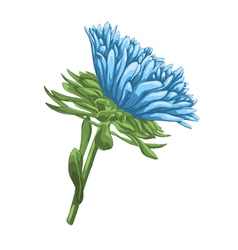 Bright blue aster with watercolor effect isolated vector