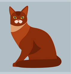 Cat breed abyssinian cute pet portrait fluffy red vector