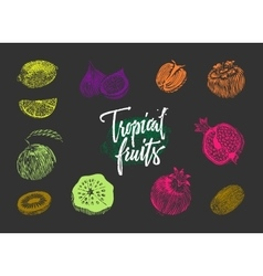 Colored Tropical Fruits Collection vector