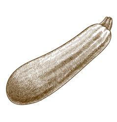 Engraving zucchini squash vector