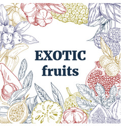 exotic fruits square frame vector image