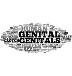 genital word cloud concept vector image