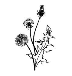 Isolated blooming meadow flower form print natural vector