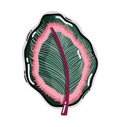 Leaf of natural plant herb botany vector