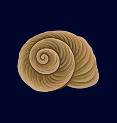 Spiral snail house or shell empty shell of a sea vector