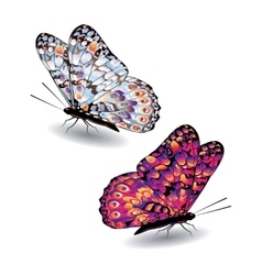 Two colorful butterflies vector image