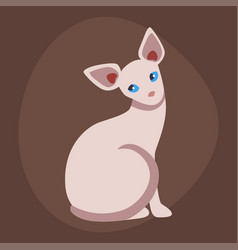 cat breed cute pet sphinx portrait fluffy young vector image