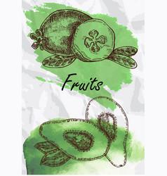 avocado and feijoa fruits vector image