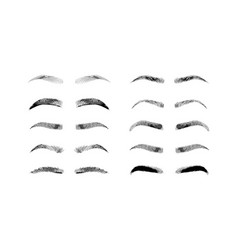 Eyebrow shapes various types of eyebrows classic vector