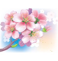 Flowers sakura vector