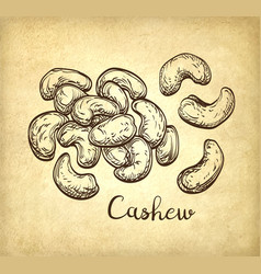 Handful of cashews vector
