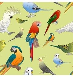Parrots set pattern vector