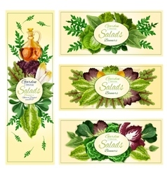 Salad leaf vegetable banner set vector