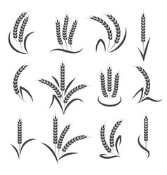 Wheat or barley ears branch vector