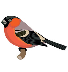 bullfinch with a red breast in a natural style vector image