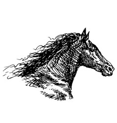 Freehand drawing head galloping horse vector