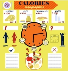 Infographic counting calories calorie diet vector