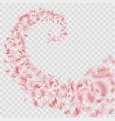 Sakura petals are falling in vortex transparent vector