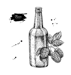 Beer glass bottle with hop Sketch vector image