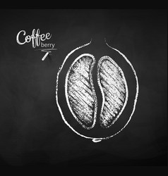 Chalk drawn sketch half cut coffee berry vector