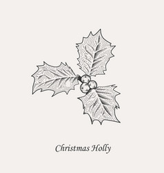 Christmas holly leaves and berries vector