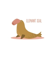 Elephant Seal vector image vector image