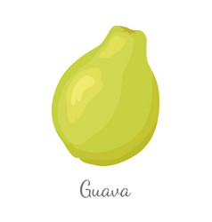 guava pineapple guavas exotic juicy fruit vector image