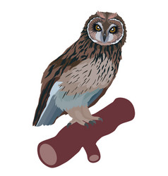owl bird sitting on a branch isolated object on a vector image