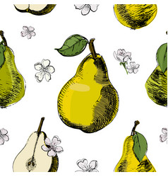 pear sketch seamless patternvintage ink hand vector image