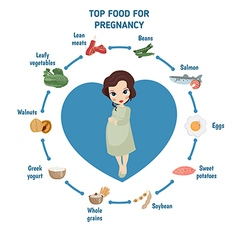 Pregnant woman diet infographic vector
