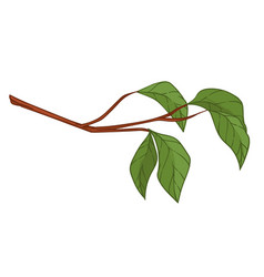 Twig with goring leaves foliage on branch vector