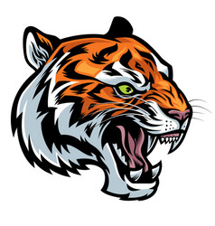 angry tiger head roaring vector image vector image