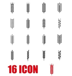 grey wheat ear icon set vector image vector image