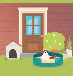 cat with bed outside house pet care vector image