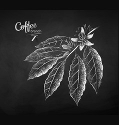 chalk drawn sketch coffee branch vector image