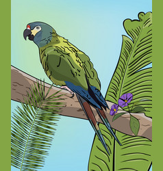 Green macaw parrot on branch vector