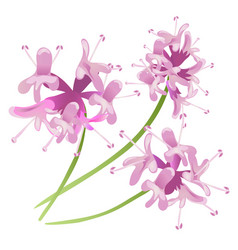 Pink flowers isolated on white background vector