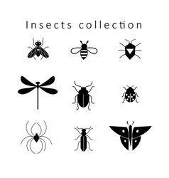 Set different insects vector