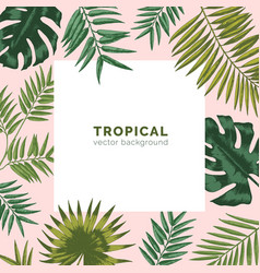 Tropical backdrop or background with frame or vector