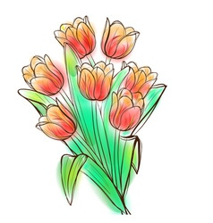 Watercolor tulips bouquet vector image