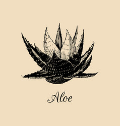 aloe hand drawn agave sketch vector image