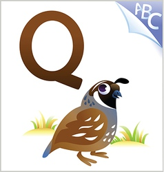 Animal alphabet for the kids Q for the Quail vector image