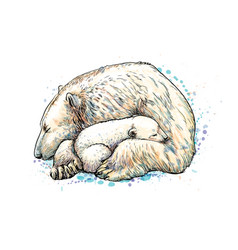 polar bear with cub from a splash of watercolor vector image